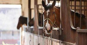 horse buying