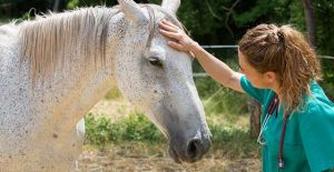 Image for the Examining your Horse Article