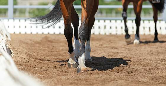 Image for Horses for Arthritis Article