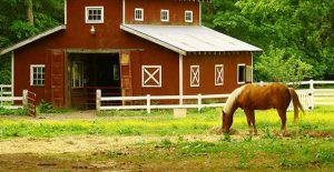 Image for Barns to Pastureland article