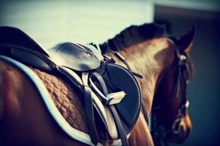 saddle art img
