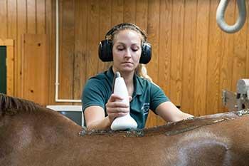 horse scan