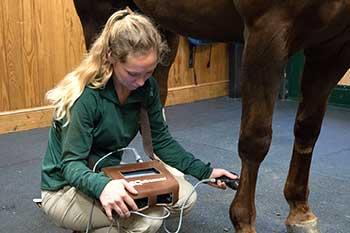 horse imaging