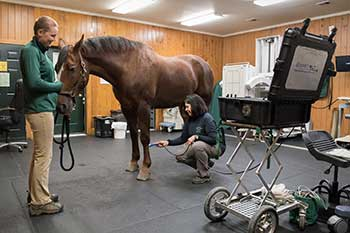 treating a horse
